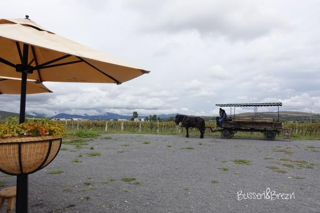 Freixenet Weinprobe Kutsche
