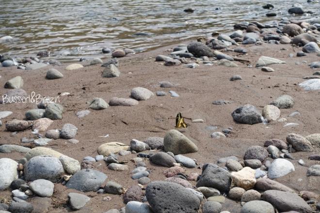 Sierra Gorda Schmetterling