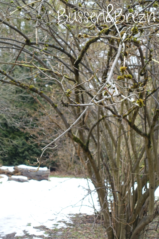 Baum Nymphenburger Park