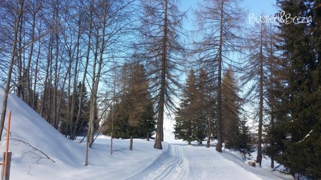 Loipe durch den Wald