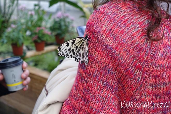 Schmetterling auf Pullover