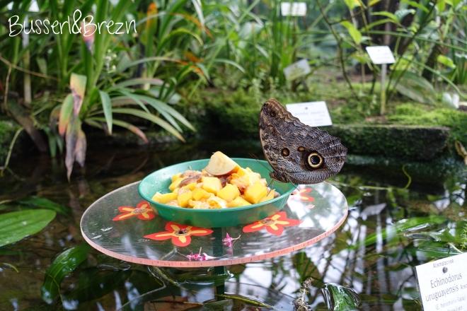 Schmetterling auf Schale