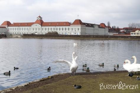 Schwan Nymphenburger Schloss