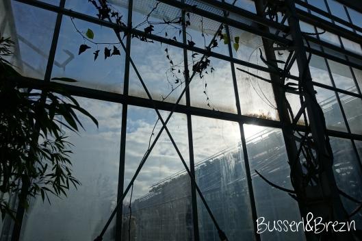 Tropenhaus Fenster