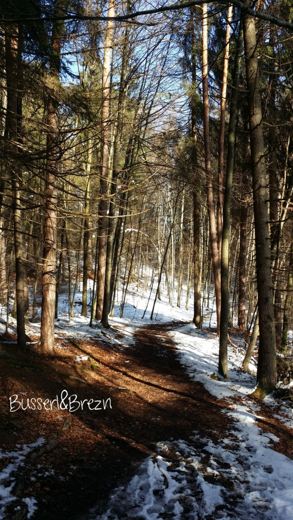 Ausflug Osterseen Waldweg