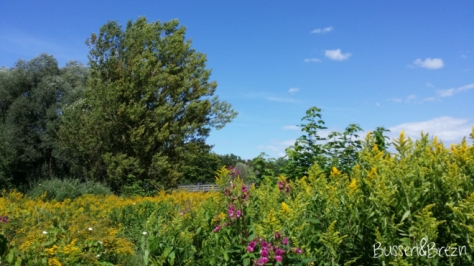 Blumenmeer an der Isar