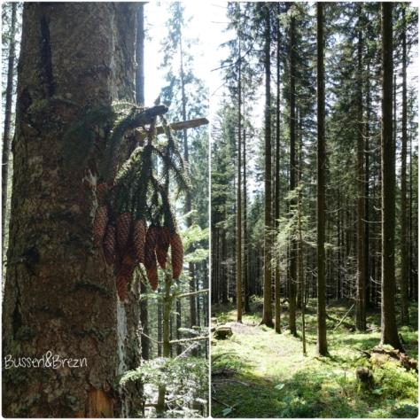 Collage Zapfen und Wald