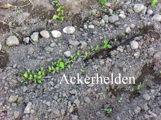 Acker 3_Ackerhelden