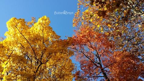 Goldener Herbst München